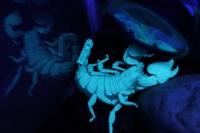 tranzite-scorpion-2012